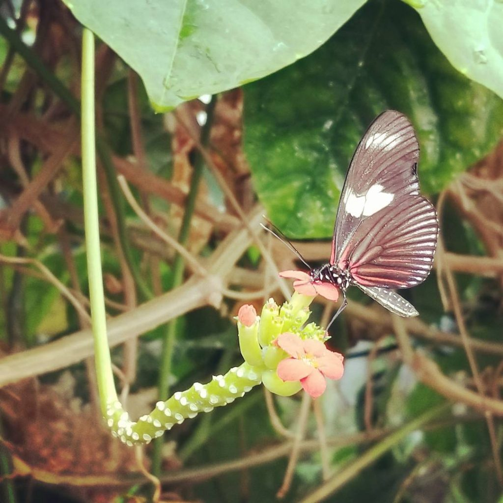 The clevelandbotanicalgarden was amazing today! sunshine butterfly summer GetOutside botanicalgardenshellip